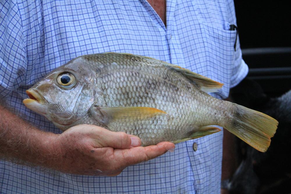 28-4-14 Fish.JPG