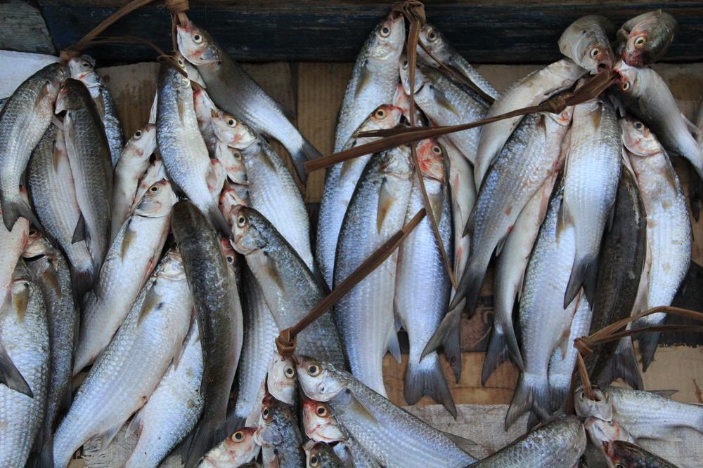 3-5-14 Fish.JPG
