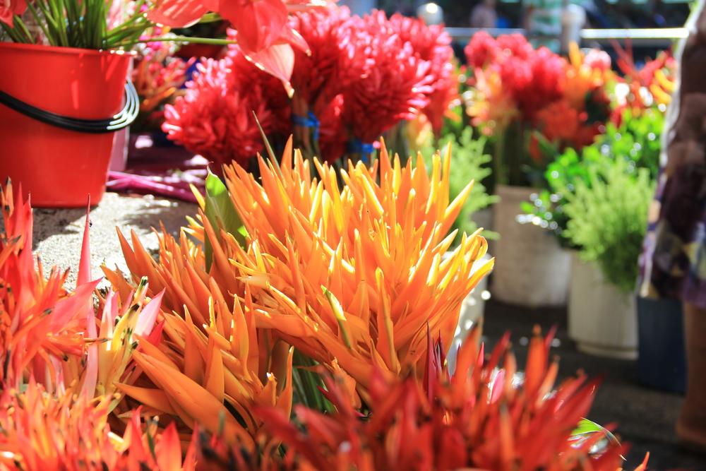 3-5-14 Flowers.JPG