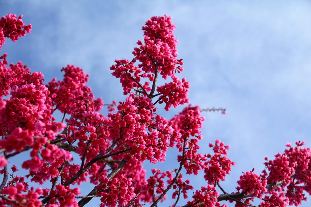 4-9-14 Blossom 4.JPG