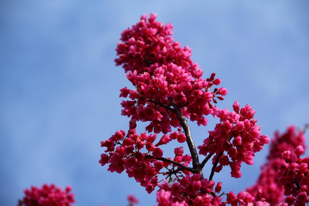 4-9-14 Blossom 5.JPG