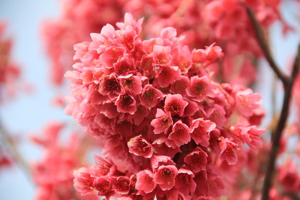 4-9-14 Blossom 7.JPG