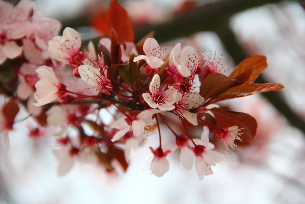4-9-14 Blossom 8.JPG