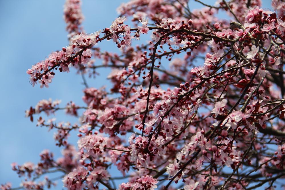 4-9-14 Blossom.JPG