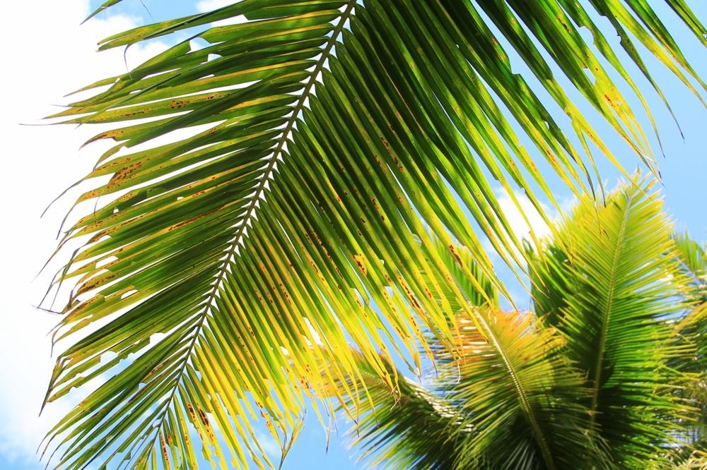9-3-15 Palm (1280x853).jpg