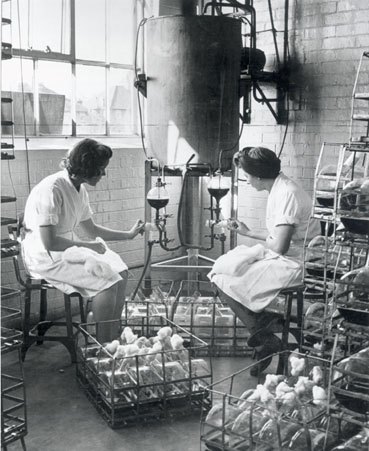Manufacturing penicillin, 1943 (Science & Society Picture Library)
