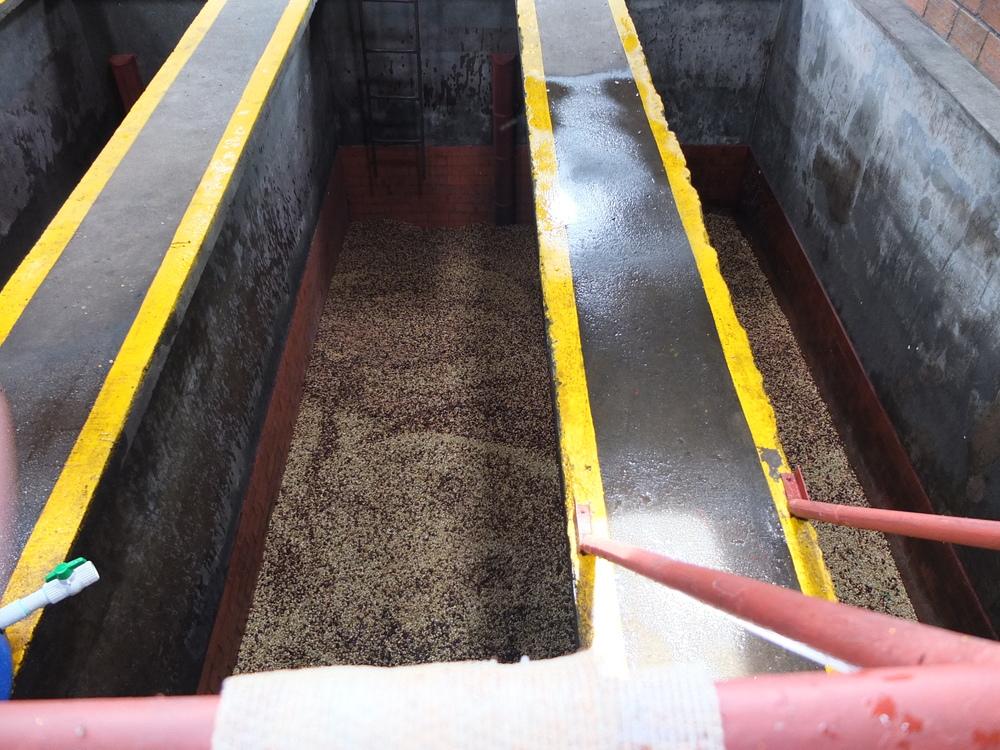 beans soaking1.JPG