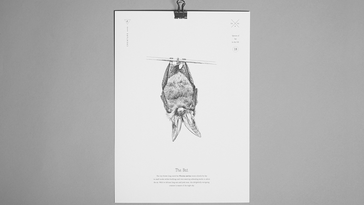 Brown long-eared bat, A4 print, £10
