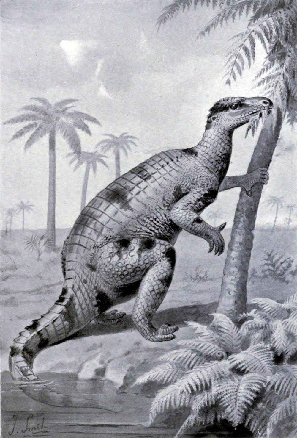 Nineteenth-century painting showing   Iguanodon   in a tripod pose.