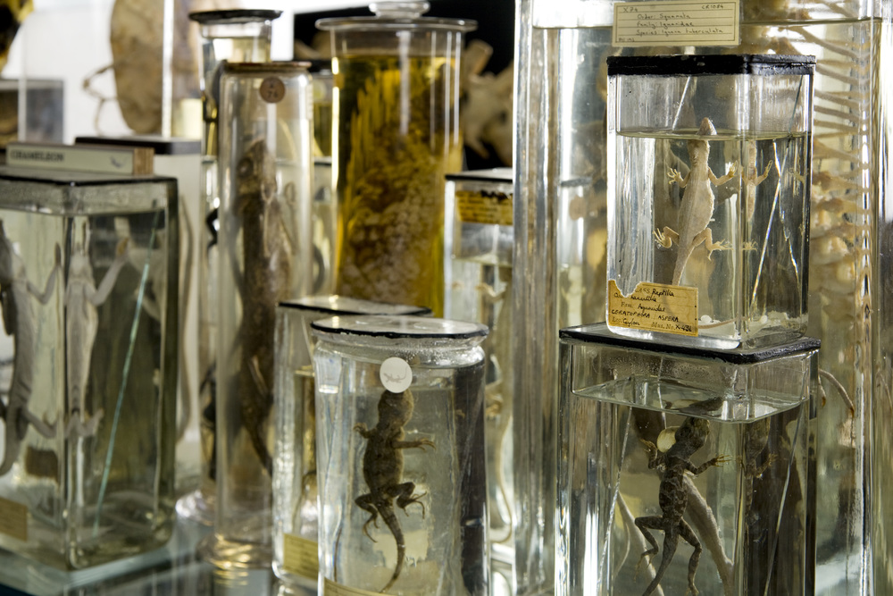 © UCL Grant Museum of Zoology/Matt Clayton