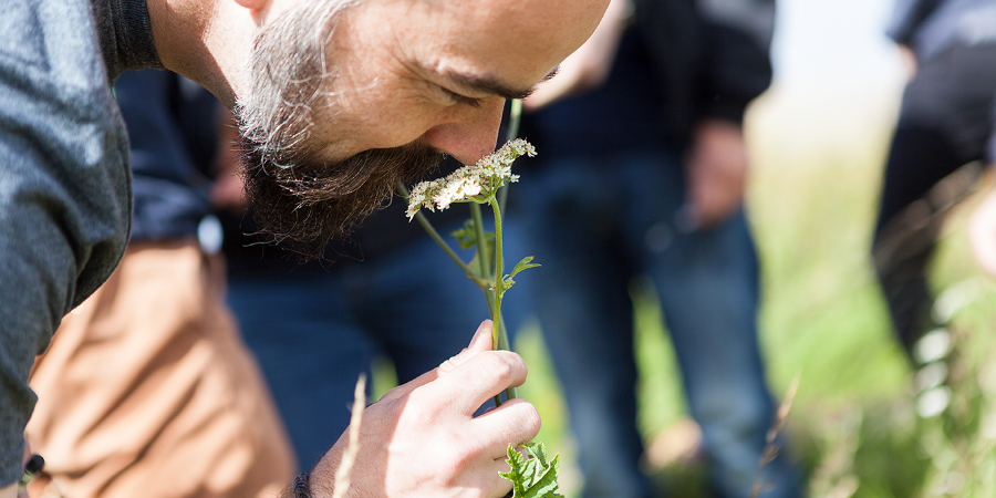 An easy way to identify hogweed is by its unpleasant smell, which Fergus likened to a urinal