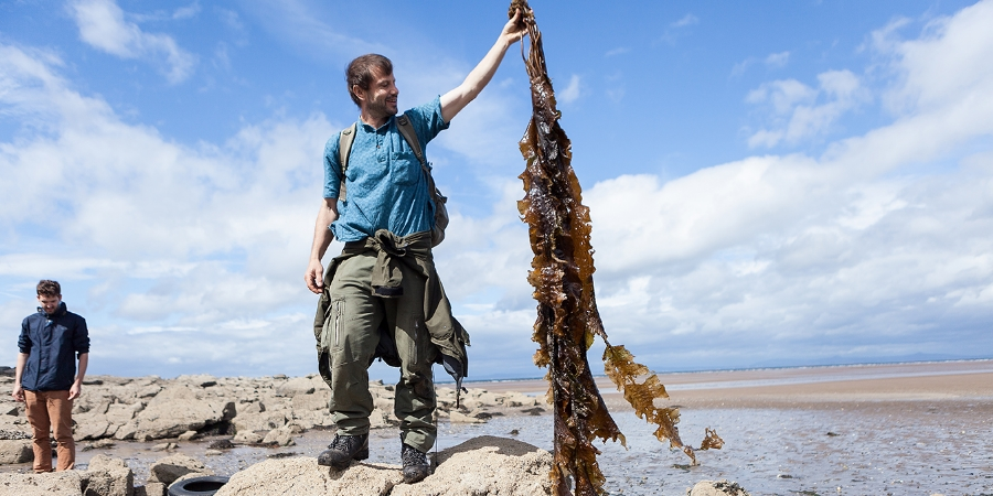 Light snack, anyone? Sugar kelp can grow up to five meters long