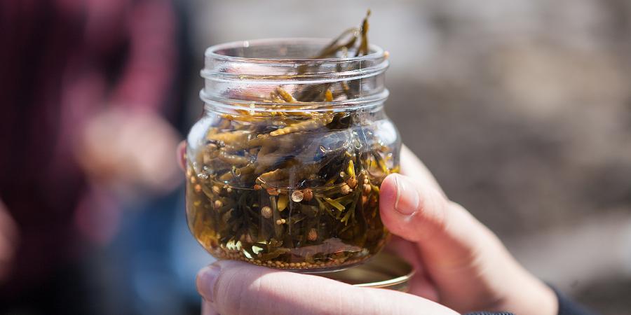 Foraged seaweed pickled in cider vinegar, lemon juice and spices
