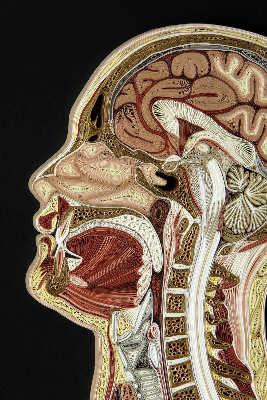 Midsagittal Female, head detail
