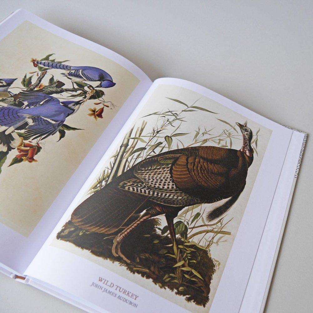 Audubon's drawings