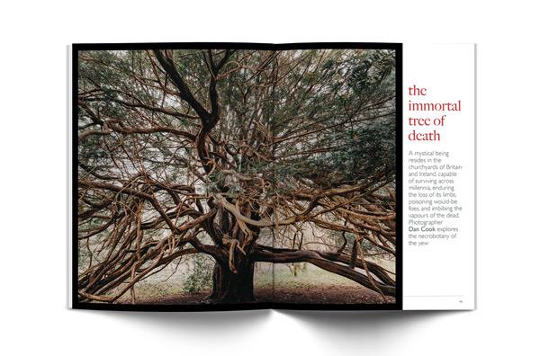 Yew-Trees (1).jpg
