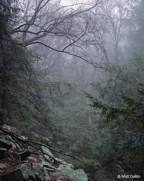 Fathomless Forest