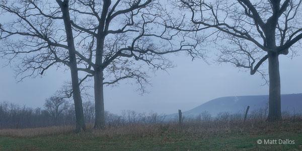 Mt. Nittany, Oaks