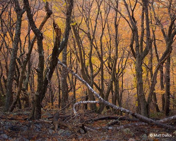Tussey Mountain, Fall