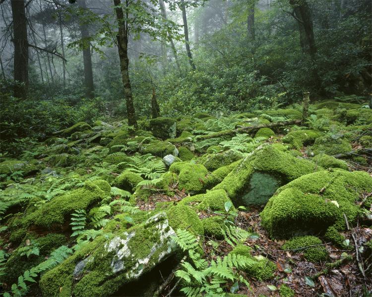 Detwiler Run Natural Area