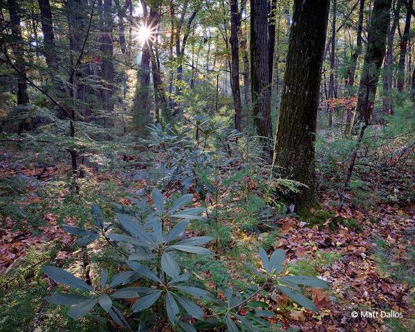 Bear Meadows Natural Area