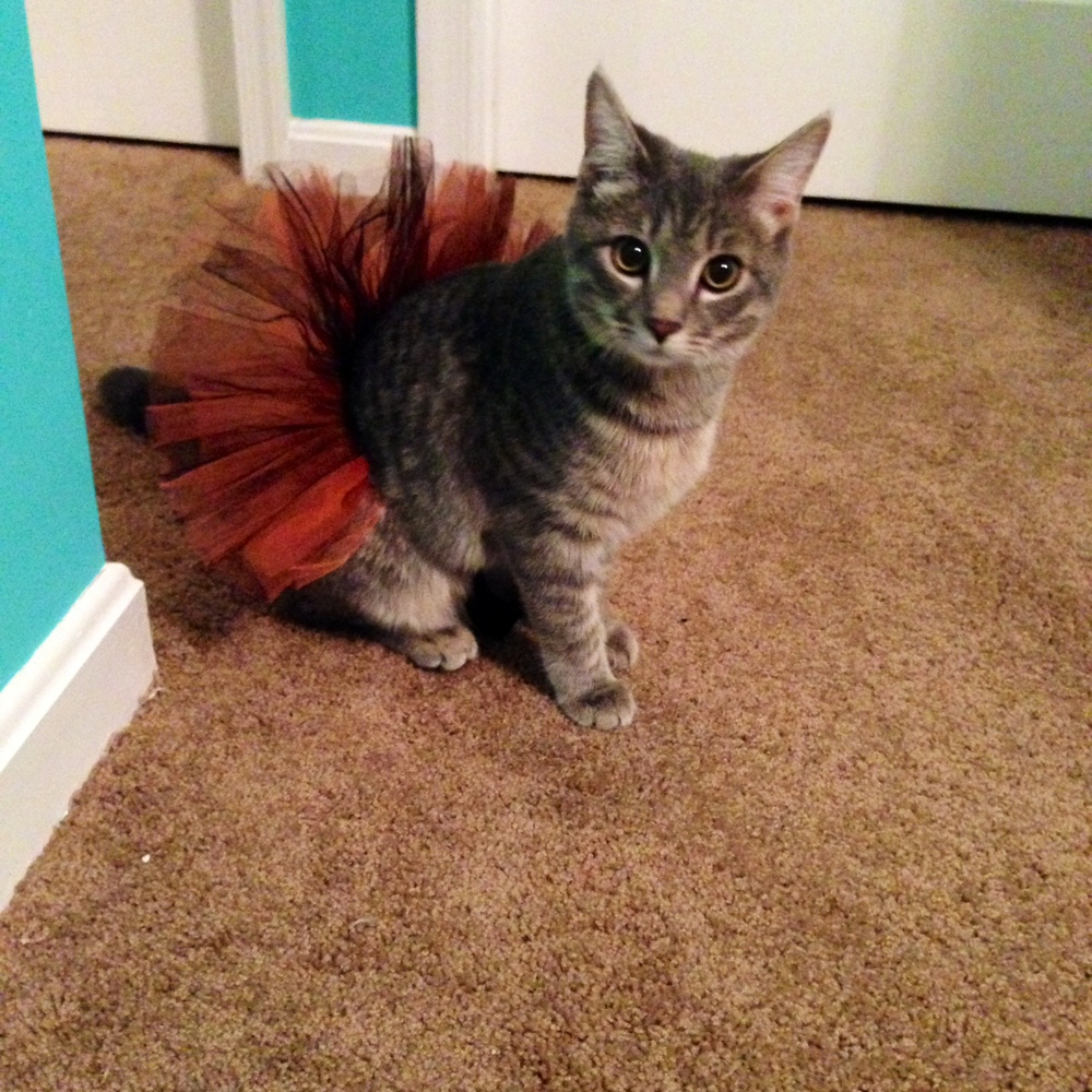 SharkBait loves her Orioles TuTu!