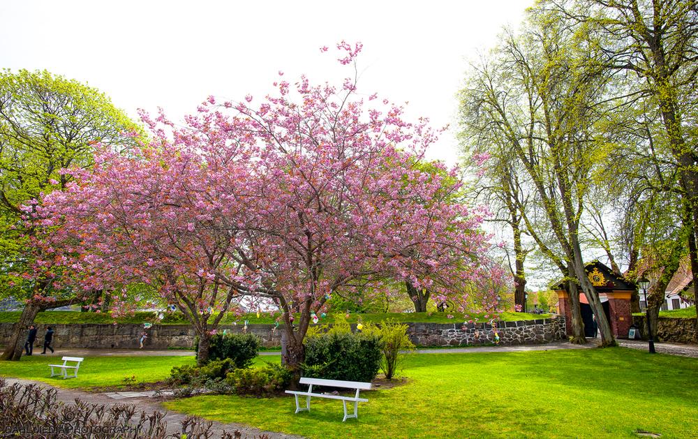 Spring-1500.jpg