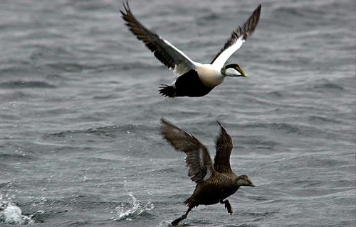 En og halv million fugler er observert i løpet av en høstsesong, og det er i alt registrert 320 forskjellige arter på Mølen.