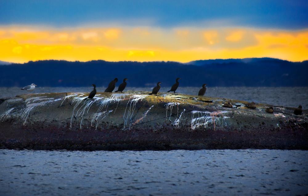 På holmene ved Mølen er det fuglene som har førsterett.