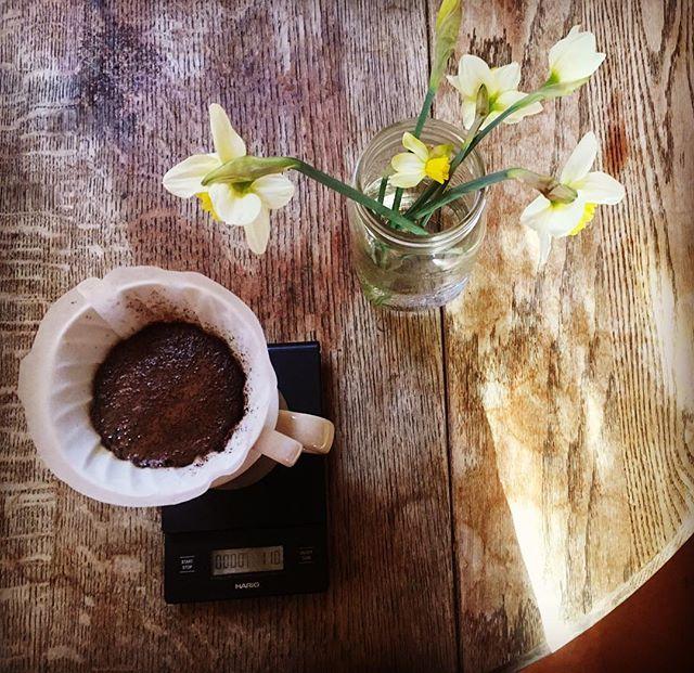 Springtime in the yurt 🌱🌷☕️ #daffodils #spring #yurtlife #mtmaxwellcoffee