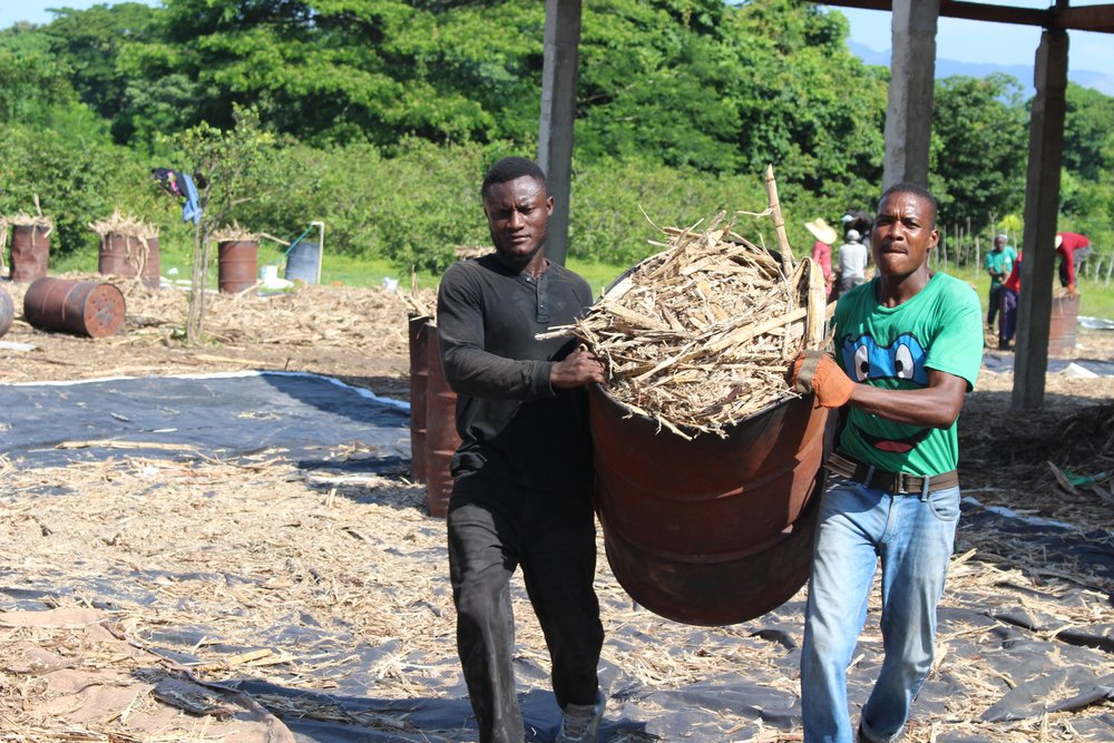 3. Workers unload agro-waste from carts. CRI has created stable rural jobs in Haiti, a country with a 40% unemployment rate.