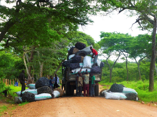 Loading charcoal for transport to Lusaka market.