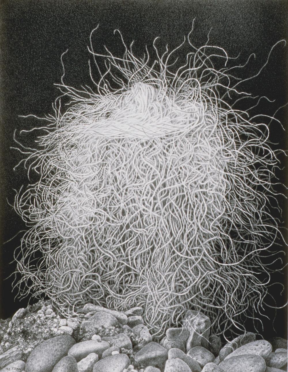 Hairy, 2002