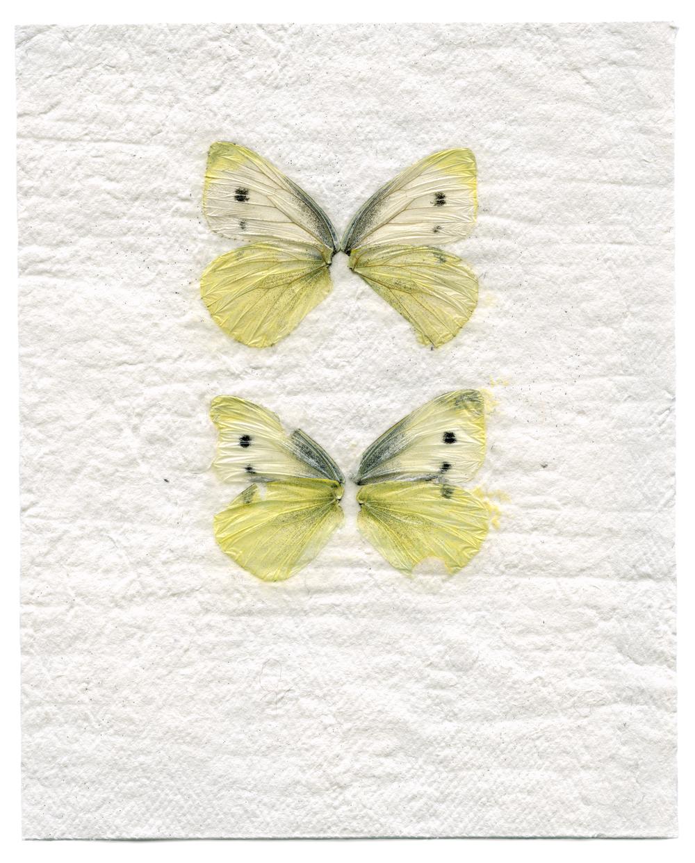 Brassica Butterflies (2014)