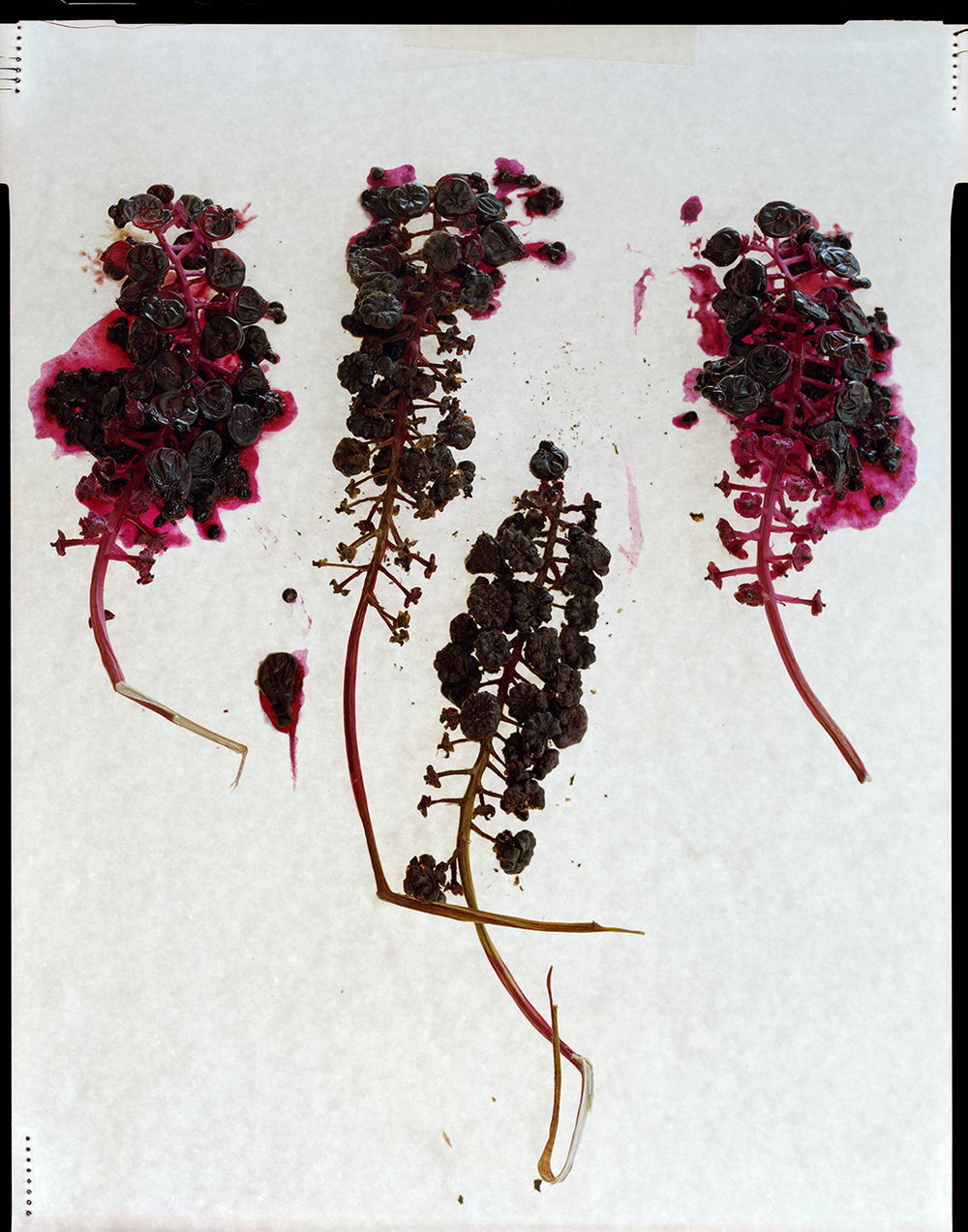 Berries (2013)