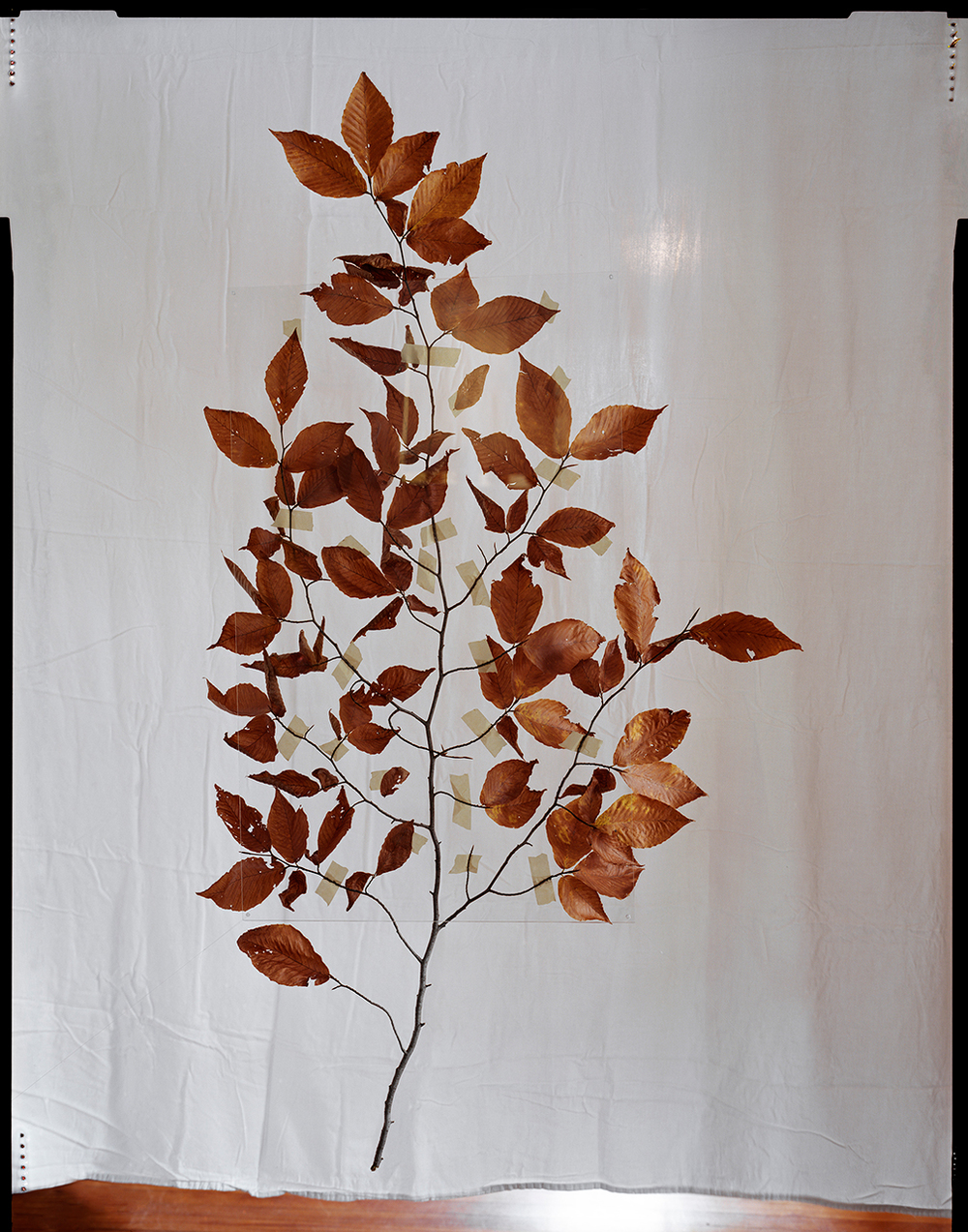 Suspended Branch (2013)