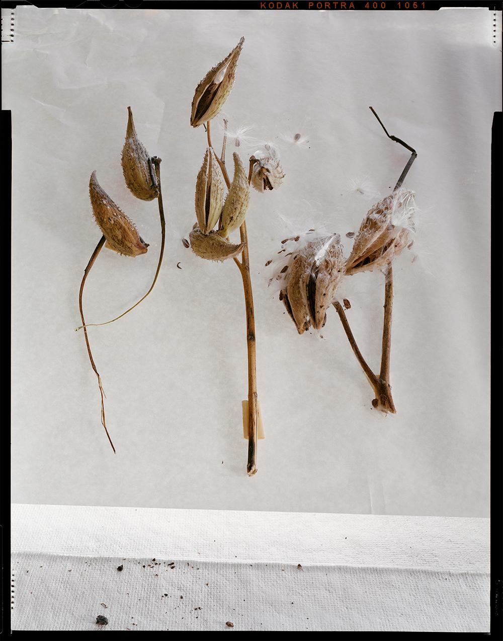 Milkweed (2013)