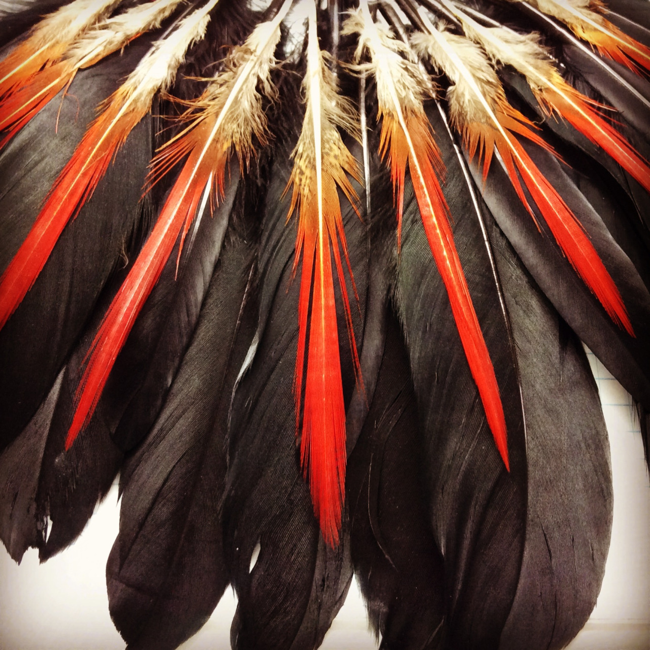 Playing around with a feather arrangement for a necklace I'm working on.
