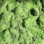 Moss used in Caldrea's Palmarosa Wild Mint fragrance
