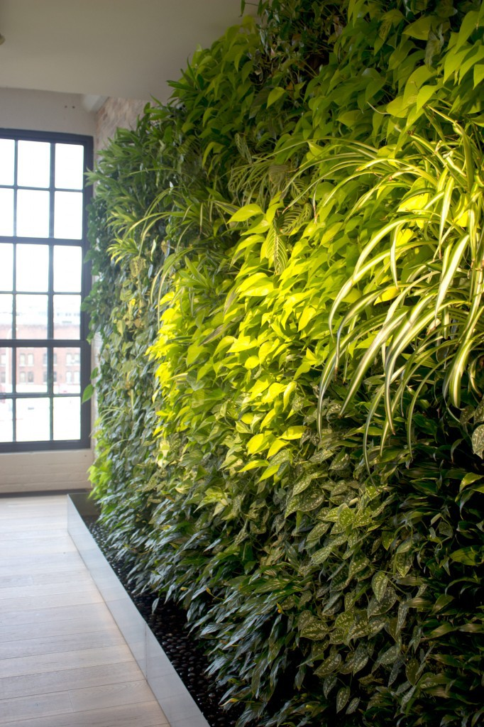 Caldrea Living Wall