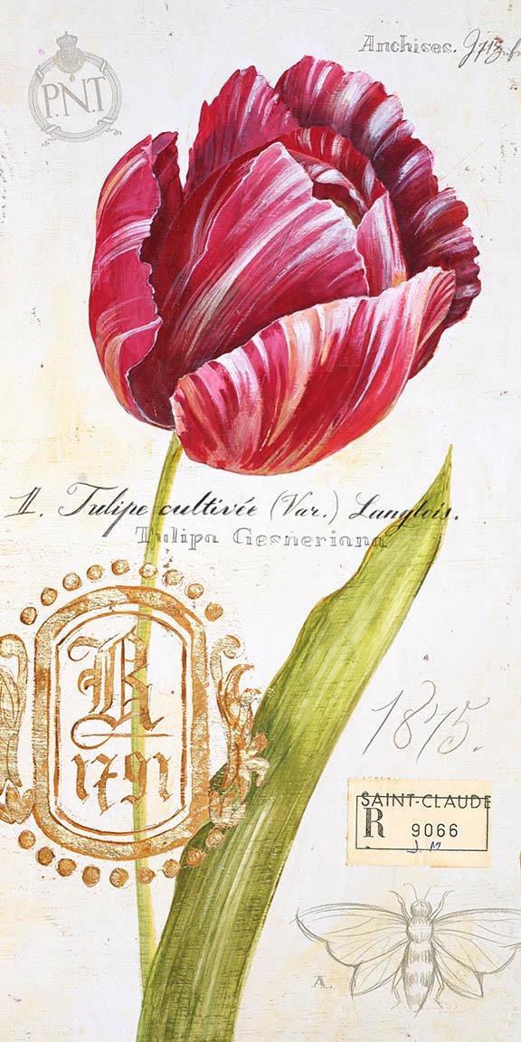 Tulip © Angela Staehling