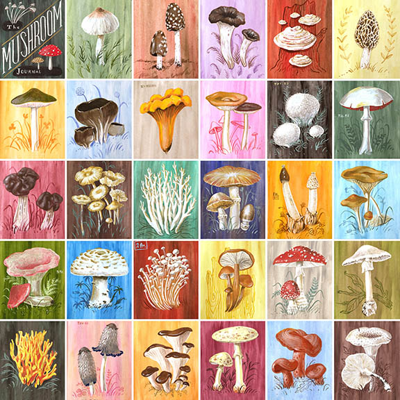 Mushrooms © Angela Staehling