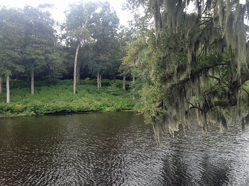 A creek at Middleton Place.