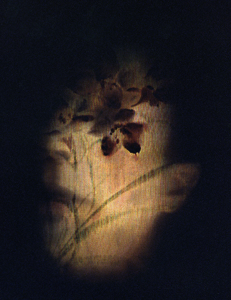 silk portrait.jpg