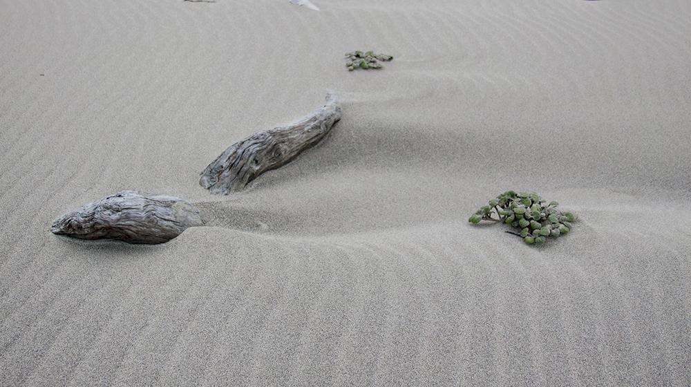 Zen Blown beach.jpg
