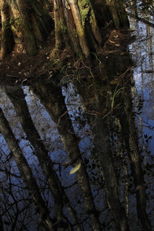 Everglade1.jpg