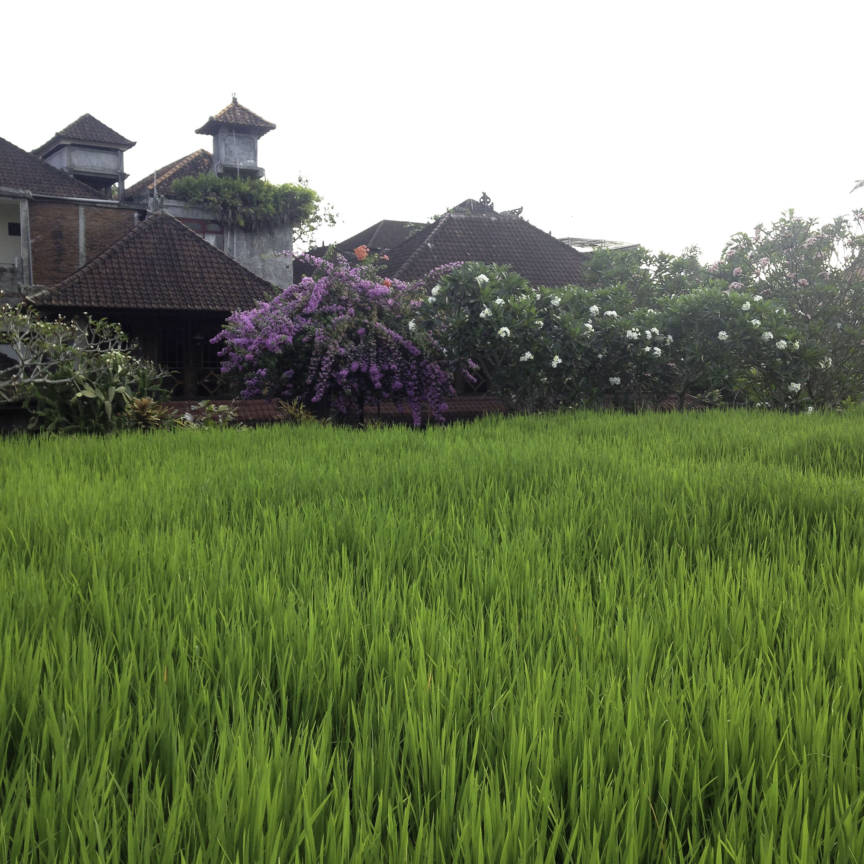 Bali_2015_1