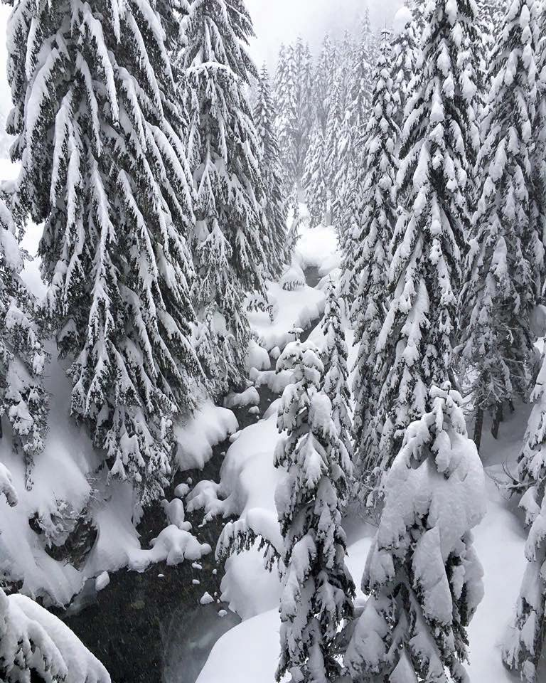 Alpental Trees