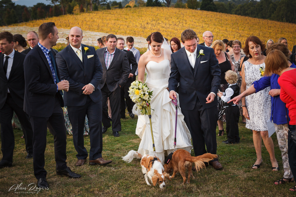Bide-groom-walking-the-puppies.jpg