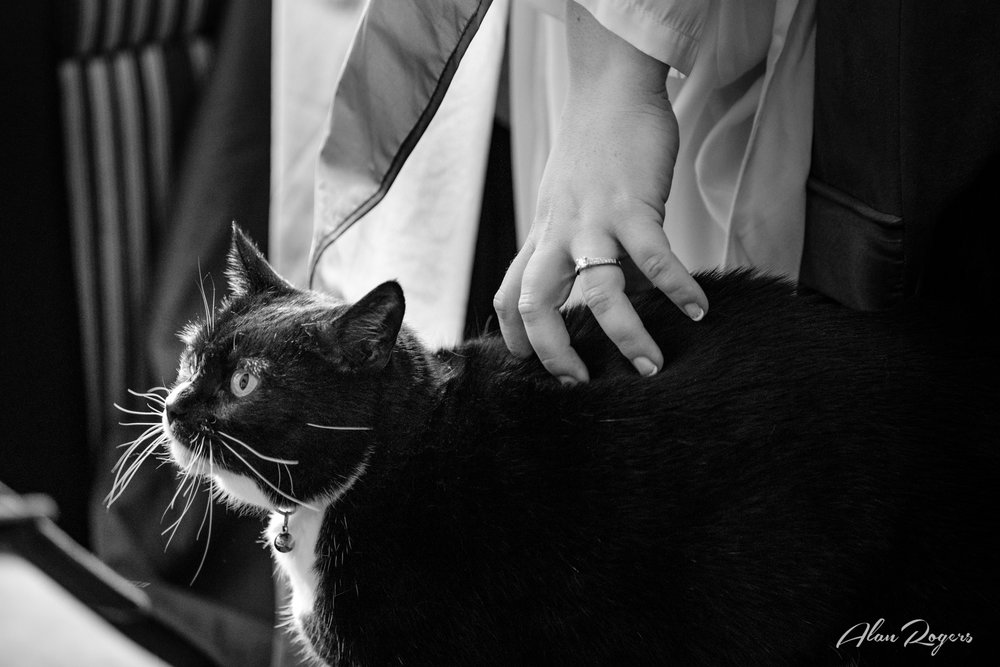 cat-with-bride.jpg